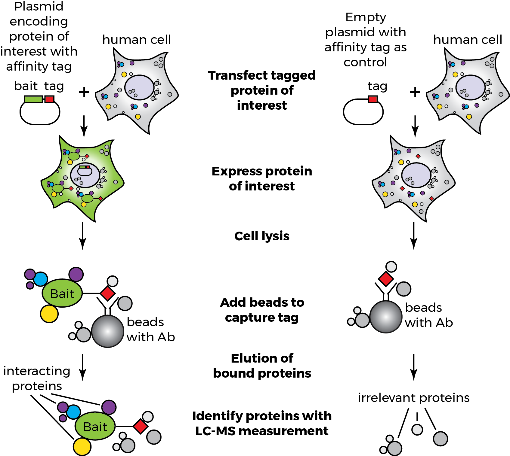 Protein-Protein Interaction Analysis